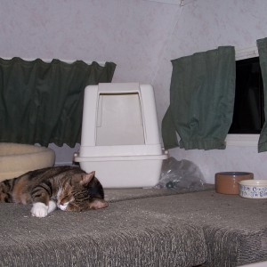 Traveling with cats? The upper bunk in an RV makes a great cat room.