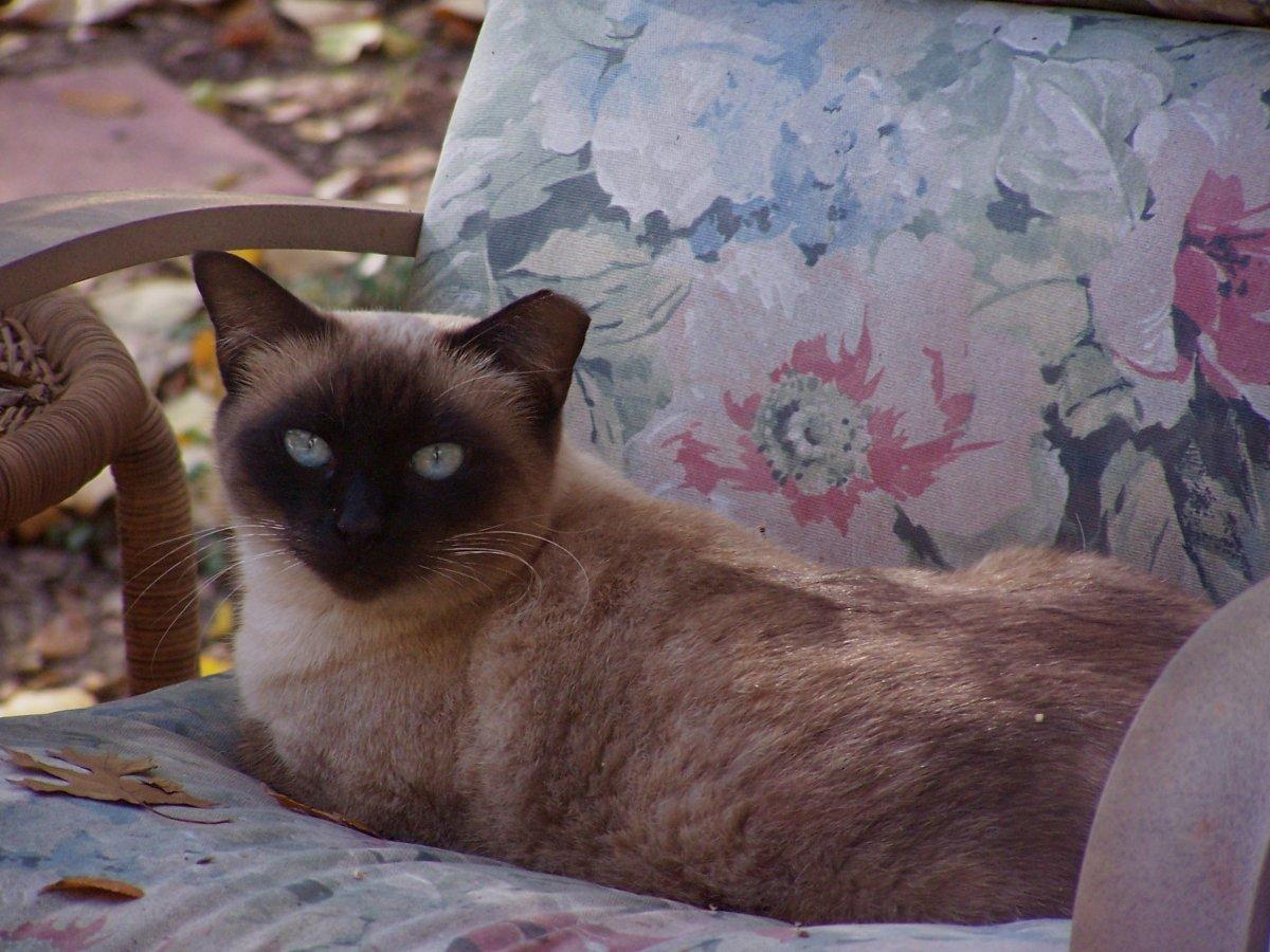 Anna Catnip Casa Cat Refuge