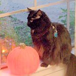 Leo in the window with a pumpkin