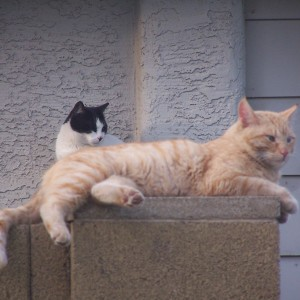community cats in Arizona