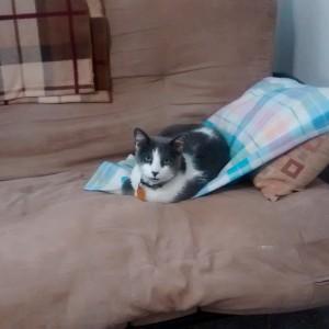Vinnie on blanket