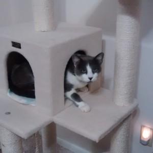 Vinnie peeking out of cubby