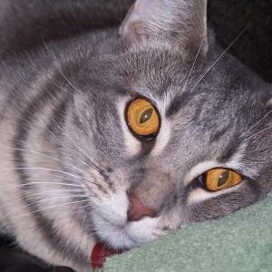 Rachel abandoned kitty