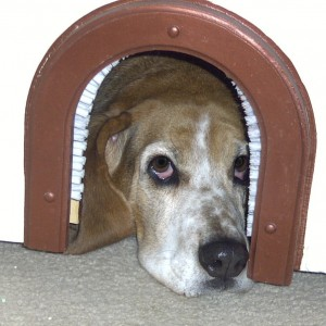 Basset nose in cat hole