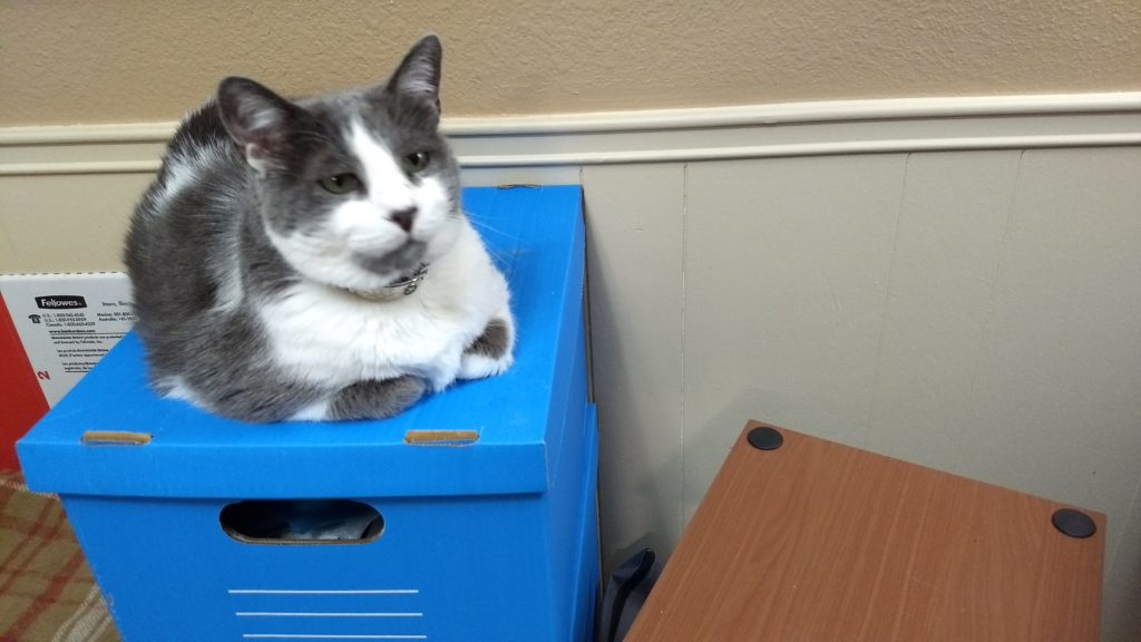 Vinnie sitting on file box