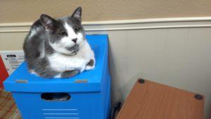 Vinnie sitting on file box